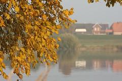 Autumn (yorkiemimi) Tags: autumn water river germany deutschland elbe herbstlaub drage flus