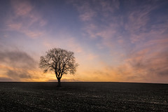 Lonely dawn (grbush) Tags: england sky tree field clouds rural sunrise landscape dawn countryside oak farm bedfordshire minimalism minimalist lonetree daybreak tokinaatx116prodxaf1116mmf28 sonyslta77