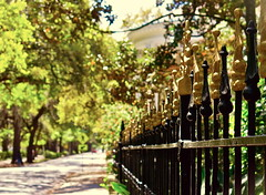 on the sunny side (B. jeweled) Tags: hff fencefriday bjeweled streetsofsavannah