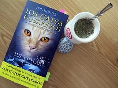 Luz Estelar (MaPeV) Tags: cats canon chats chat tabby kitty gatos books powershot gato kawaii neko katze libros gatti felin gattoni gattini g16 tabbyspoted losgatosguerreros herinhunter lanuevaprofecia