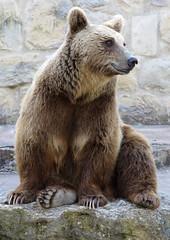 242-March'16 (Silvia Inacio) Tags: bear portugal zoo lisboa lisbon urso jardimzoologico