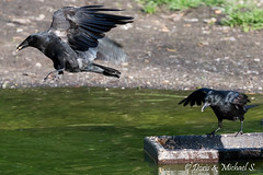 Vogel / Bird (Doris & Michael S.) Tags: bird animals tiere oiseau vogel