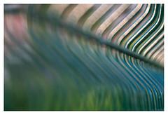 Curvehlicious (leo.roos) Tags: lens prime gate patterns curves rr repetition fl challenge hek day122 focallength primes lenzen dyxum kodakno2foldingautographicbrownie darosa rondingen brandpuntsafstand leoroos dayprime a7rii dayprime2016 bauschlombrapidrectilinear1228