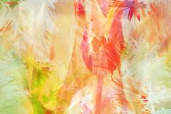Colormania - Tulpen (macplatti) Tags: multipleexposure farbe pleasure springtime frühling freude colorexplosion farbexplosion mehrfachbelichtung canon5dmarkiii caonef100mm