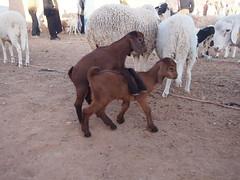 P4161999 (t_y_l) Tags: morocco marokko tinghir suq 2016 tinerhir