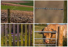 Fences (Different Aspects) Tags: spring wire fences bull barbed charlois