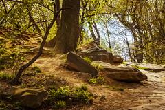 Rock Garden (Joyce and Steve) Tags: park newyorkcity trees brown sun forest spring centralpark ramble
