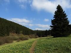 IMG_8936 (Bike and hiker) Tags: ardennen ardennes eifel hellenthal narzissen narcissen oostkantons rocherath olef krinkelt holzwarche jansbach bachtaler