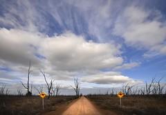 Winton Wetlands (phunnyfotos) Tags: road sky cloud signs weather sign clouds landscape nikon track skies australia victoria vic dirtroad kangaroos wetland warningsign winton gravelroad glenrowan deadtrees benalla sigma1020mm northeastvictoria taminick lakemokoan d5100 wintonwetlands nikond5100 phunnyfotos