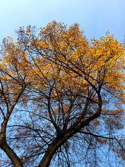 Herbst bei Planten un Bloomen