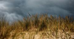 dos à la mer (alouest225) Tags: plage beach dune sable sand gironde aquitaine france sony rx100m3 landscape paysage nature seascape alouest225 lasalie hdr stormsky