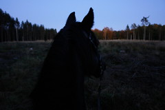(anjamation) Tags: sonydscr1 unaltered riding forest horse october 2009 verona theforest