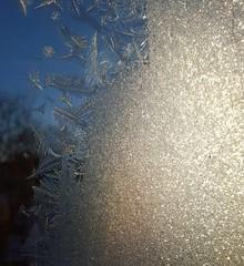 Frosty (Mamluke) Tags: winter cold texture textura hiver invierno kalt inverno frío freddo froid koude