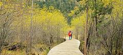 九寨沟-2-  (3) (johnson jin) Tags: nature landscape 风景 风光,九寨沟,scene
