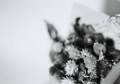 0115 (_n1_k) Tags: blackandwhite 35mmfilm nikonfm3a
