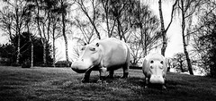 Tales from the English countryside II (Frank Busch) Tags: greatbritain blackandwhite bw monochrome field grass countryside blackwhite farm meadow hippos barnsdale frankbusch frankbuschphotography imagebyfrankbusch wwwfrankbuschphoto