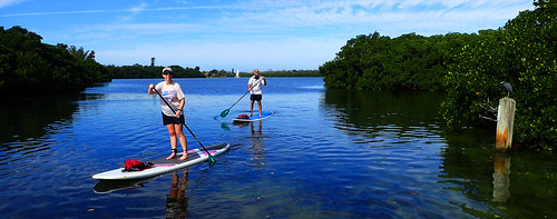 1_8_16 paddleboard tour Sarasota Florida 06