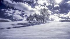 Arm in arm (drstar.) Tags: winter snow tree flickr winterlandscape wintersun lonelytrees winternature flickrturkey nikond610