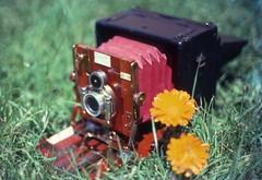 Tropical Sanderson camera. c1910 (Lim SK) Tags: camera vintage antique tropical tropic sanderson