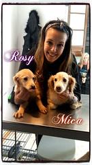 Rosy y Mica (santuariolacandela) Tags: españa puppy spain puppies cachorros mica animalsanctuary femaledog adoption rosy cachorra hembra utrera rescate fosterhome acogida adopción cabezalavaca santuariolacandela