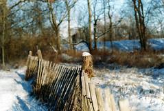 Warm sun on a cold winter day (francescomonacco) Tags: wood winter sun snow sunshine analog fence kodak analogue praktica mtl5b fb200