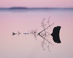 Focus Pastel (trm42) Tags: morning autumn lake reflection silhouette frost branches horizont seinjoki syksy 1c pohjanmaa hirvijrvi aamu etelapohjanmaa
