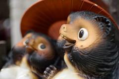 DSC_0785_1 (koboyan) Tags: dog japan raccoon 狸 信楽焼