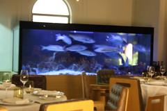 acuario en restaurante (javierortegaferrandez) Tags: peces acuario