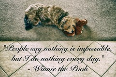 6/52 - Winnie the Pooh (Regular Expressions) Tags: pets dogs animals quotes pooh winniethepooh 52weeksthe2016edition week62016 weekstartingfridayfebruary52016