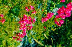 Mallorca, 1995 (Thomas Tolkien) Tags: landscape education teacher tolkien thomastolkien tomtolkien tolkienphotography httpsthomastolkienwordpresscom