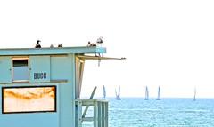 Men & Birds enjoying a beautiful Sunday (susycue) Tags: sea beach venicebeach lifeguardtower