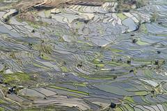 Laohuzui -Yuanyang - Yunnan - China (wietsej) Tags: china macro landscape rice minolta sony terraces 100 yunnan yuanyang a3000 laohuzui