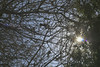 Sun and Bird Head-on (cobalt123) Tags: arizona canon tucson firstphotos age11 2016 anavey tucsonrockandgemshow xti canonrebelxti anaveybolender