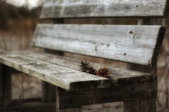 forgotten treasures (s@ssyl@ssy) Tags: beach bench wooden seat seaglass pinecones