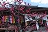 Ume Blossoms, Chishaku-in Temple, Kyoto (kyoshiok) Tags: flower japan kyoto umeblossoms chishakuintemple