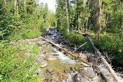 Rushing Waters of Lake Creek (Patricia Henschen) Tags: mountains creek moose jackson wyoming grandtetons tetons preserve naturepreserve grandtetonnationalpark lakecreek laurancesrockefellerpreserve