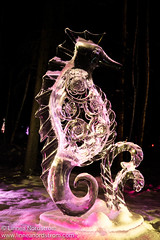 Ice Art - Seahorse (Linnea Nordstrm) Tags: world winter sculpture cold color art ice beautiful alaska night championship artwork colorful artistic cut creative exhibit carving illuminated carve arctic sparkle nighttime colored block lit icy sparkling fairbanks sculpt iceart icepark