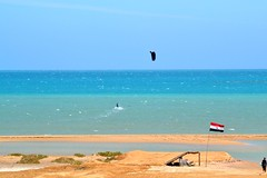 30_03_2016 (playkite) Tags: march spring big egypt kiteboarding gouna elgouna 2016      kitelessons kiteinhurghada wwwplaykitecom