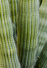 Backyard Cactus 054 (ljguitar) Tags: quail centuryplant suncitywest backyardcactus petemarilyn
