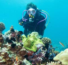 Cliffhanger, Filitheyo - Maldives - Lieux, Filitheyo - Maldives - Site, Maldives - Lieux, Maldives - Site 1632.jpg (hgh68) Tags: site maldives plonge cliffhanger lieux filitheyo