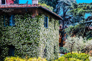 House in Bloom - Tuscany, Italy