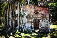 Nature takes back (Passie13(Ines van Megen-Thijssen)) Tags: building nature canon colonial plum ruine nouvellecaldonie newcaledonia kolonial koloniaal tamron2470 nieuwcaledonie inesvanmegen inesvanmegenthijssen