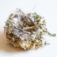 27th April - Messy (sminchin1977) Tags: bird nest messy birdsnest aprilphotoadaychallenge fmsphotoaday