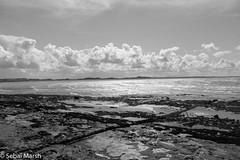 Enniscrone B&W (sebai123) Tags: ocean ireland sea blackandwhite seaweed beach monochrome canon landscape happy walk kitlens 1200d