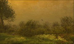 Early Morning (ilyra.chardin) Tags: morning spring cloudy goose foliage fox