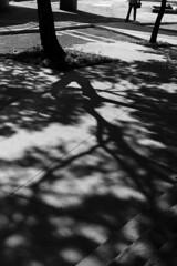 Terminal Bandeira, SP (Th. C. Photo) Tags: street light shadow blackandwhite bw bandeira photography downtown centro streetphotography pb terminal sp streetphoto rua fotografia pretoebranco fotografiaderua terminalbandeira downtownsp streetphotographysp
