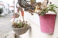 IMG_6327 (therealtutkun) Tags: street flowers summer bozcaada