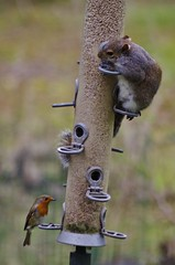 Need to share (Sundornvic) Tags: bird squirrel nuts feeder seeds feed robbery stealing
