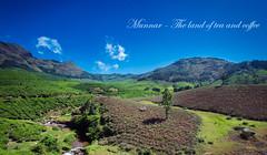 Munnar- Land of tea and coffee ([s e l v i n]) Tags: wallpaper india green nature landscape tea kerala greenery munnar teaestate keralatourism keralatravel picturesofkerala selvin