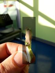 Le petit lphant de l'attente - 1 (lewshima) Tags: chewinggum clinique salledattente